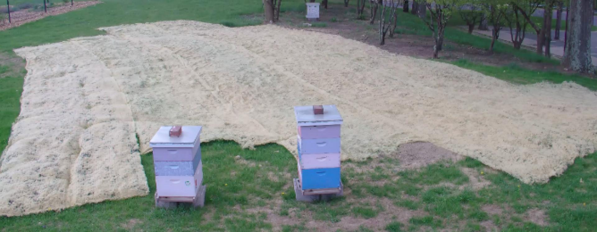 Lehigh Bee Cam